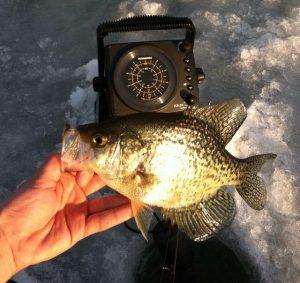 Ice Fishing - Crappie